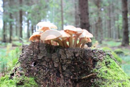 Fungus toadstool mushroom green.