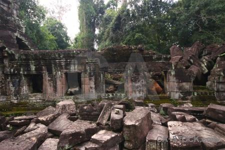 Fungus unesco asia preah khan siem reap.