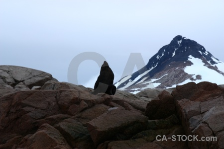 Fur seal antarctica snow horseshoe island cruise.