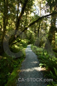 Furn path plant south island forest.