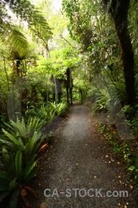 Furn purakaunui falls forest catlins path.