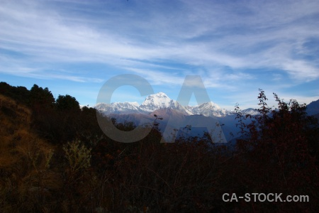 Ghoreapani trek cloud poon hill dhampus peak.