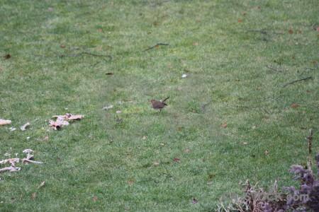Grass bird green animal robin.