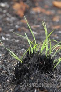 Grass burnt europe plant javea.