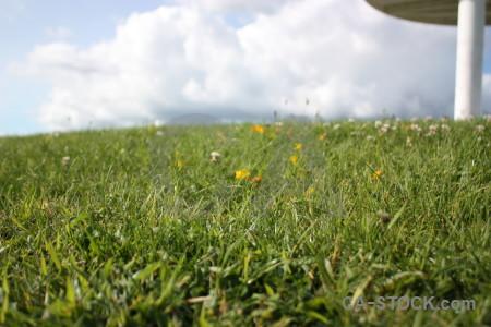 Grass field white green.