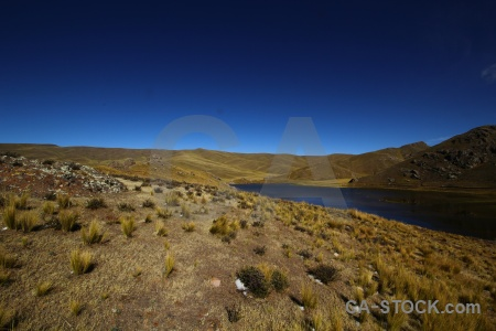 Grass laguna lagunillas andes altitude south america.