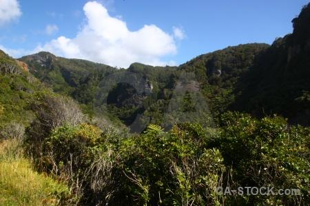 Grass mountain south island bush tree.