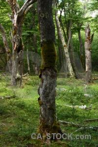 Grass plant branch moss tree.