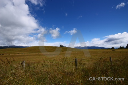 Grass sky field cloud te anau.