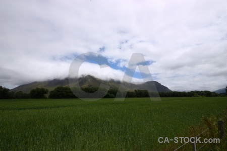 Grass sky south island cloud field.