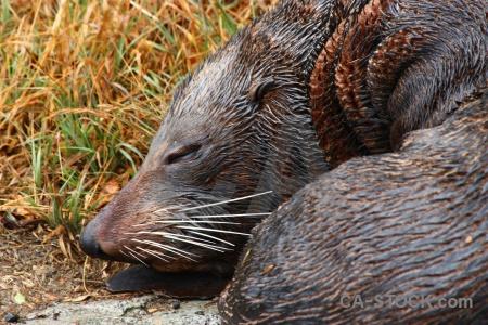 Grass sleep whisker seal new zealand.