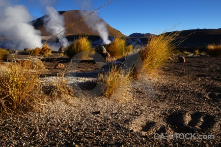 Grass steam landscape atacama desert andes.