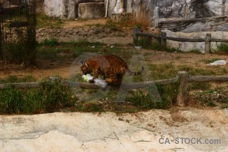 Grass thailand tiger temple wat pa luang ta bua yansampanno southeast asia.