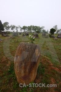 Grass urn fungus plain of jars asia.