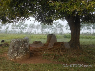 Grass urn megalithic tree plain of jars.