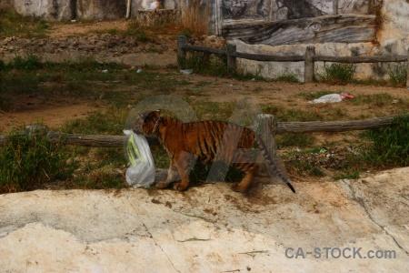 Grass wat pa luang ta bua yansampanno thailand animal luangta maha yannasampanno.