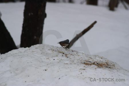 Gray animal bird.