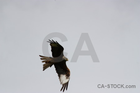 Gray animal bird sky flying.