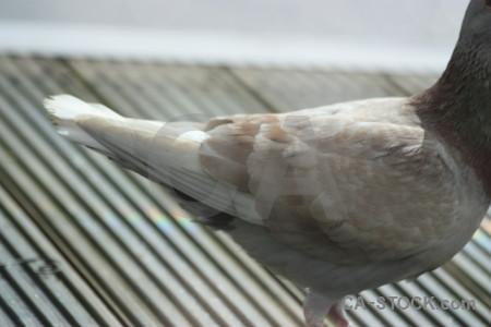Gray animal dove pigeon bird.