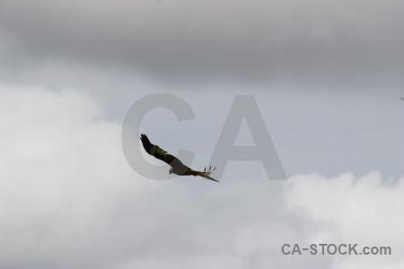 Gray bird flying animal sky.