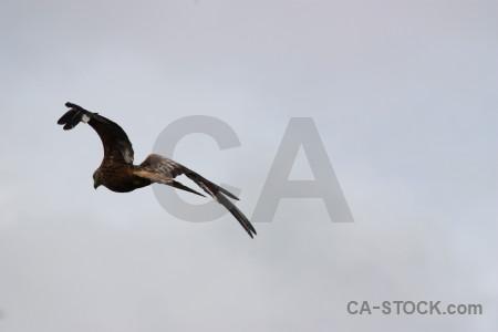Gray bird sky flying animal.