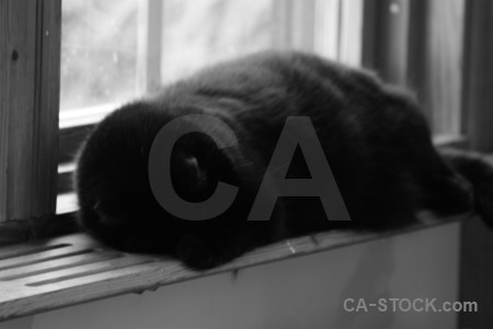 Gray cat animal.