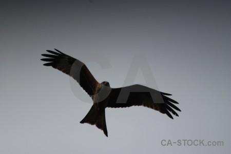 Gray flying animal sky bird.