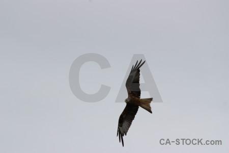 Gray flying bird sky animal.