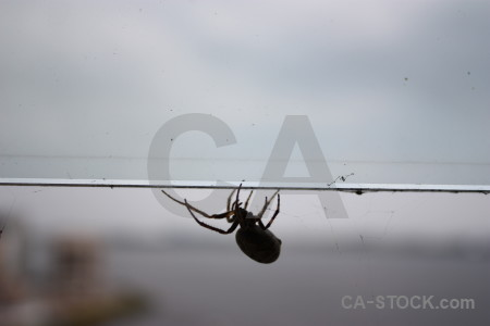 Gray insect animal spider.