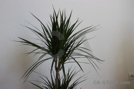 Gray plant leaf.
