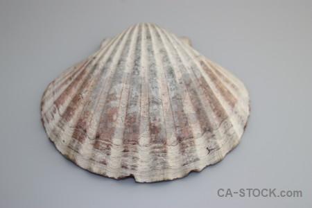 Gray shell.