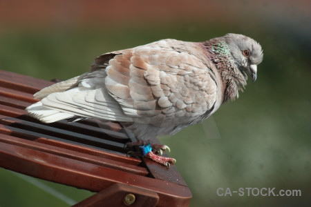 Green animal dove pigeon bird.