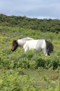 Green animal horse.