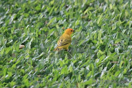 Green bird animal.