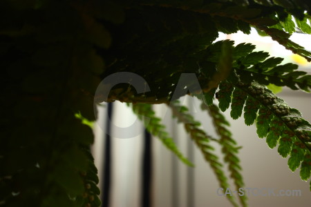 Green black fern plant leaf.