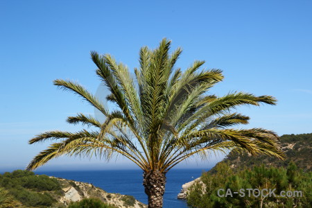 Green blue javea spain palm tree.