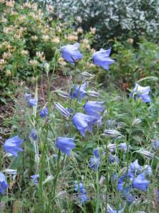 Green blue plant flower.
