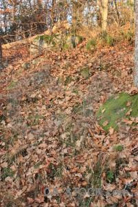Green brown forest ground.