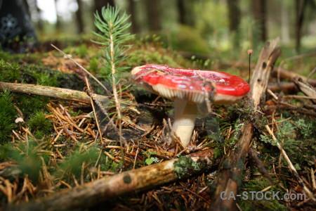 Green brown toadstool mushroom fungus.