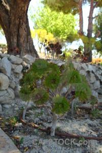 Green bush plant.