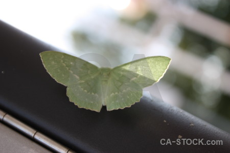Green butterfly animal insect white.