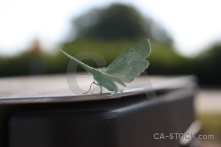 Green butterfly insect animal white.
