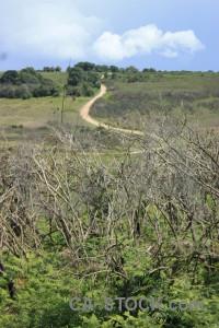 Green field landscape.
