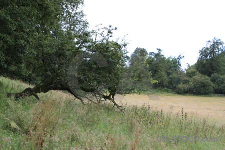 Green field white landscape.