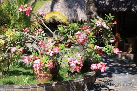 Green flower pink plant.