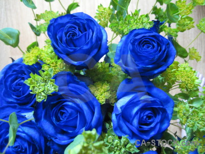 Green flower rose blue plant.