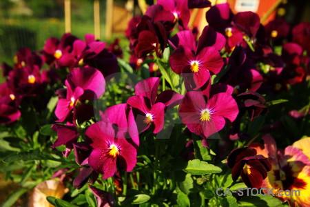 Green flower violet plant pink.