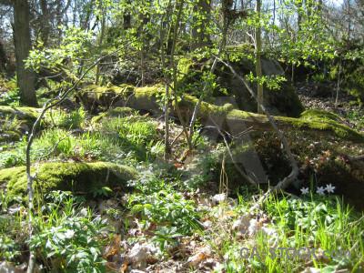 Green forest ground.