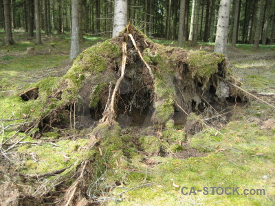 Green forest ground tree root.