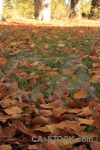 Green forest orange brown ground.